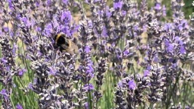 Photo of Green recovery at the heart of this year's Bees' Needs Week