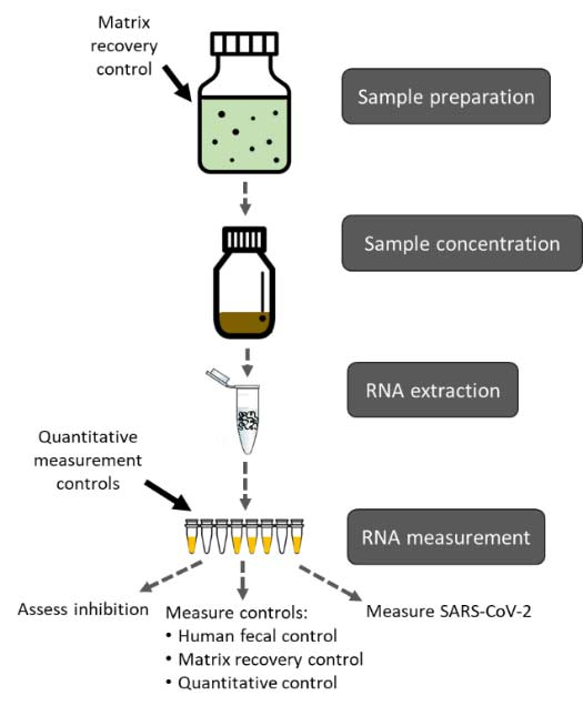 illustration of wastewater sample processing and testing for SARS-CoV-2