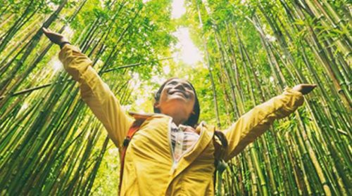 WTTC and Harvard T.H. Chan School Release Papers to Drive Sustainability in Tourism