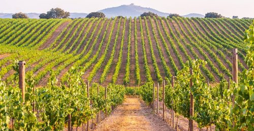 Wine Tourism and Rural Development Discussed in Portugal in September 2021