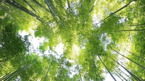 More than 2.5 Billion Trees to be Conserved, Restored, and Grown by 2030